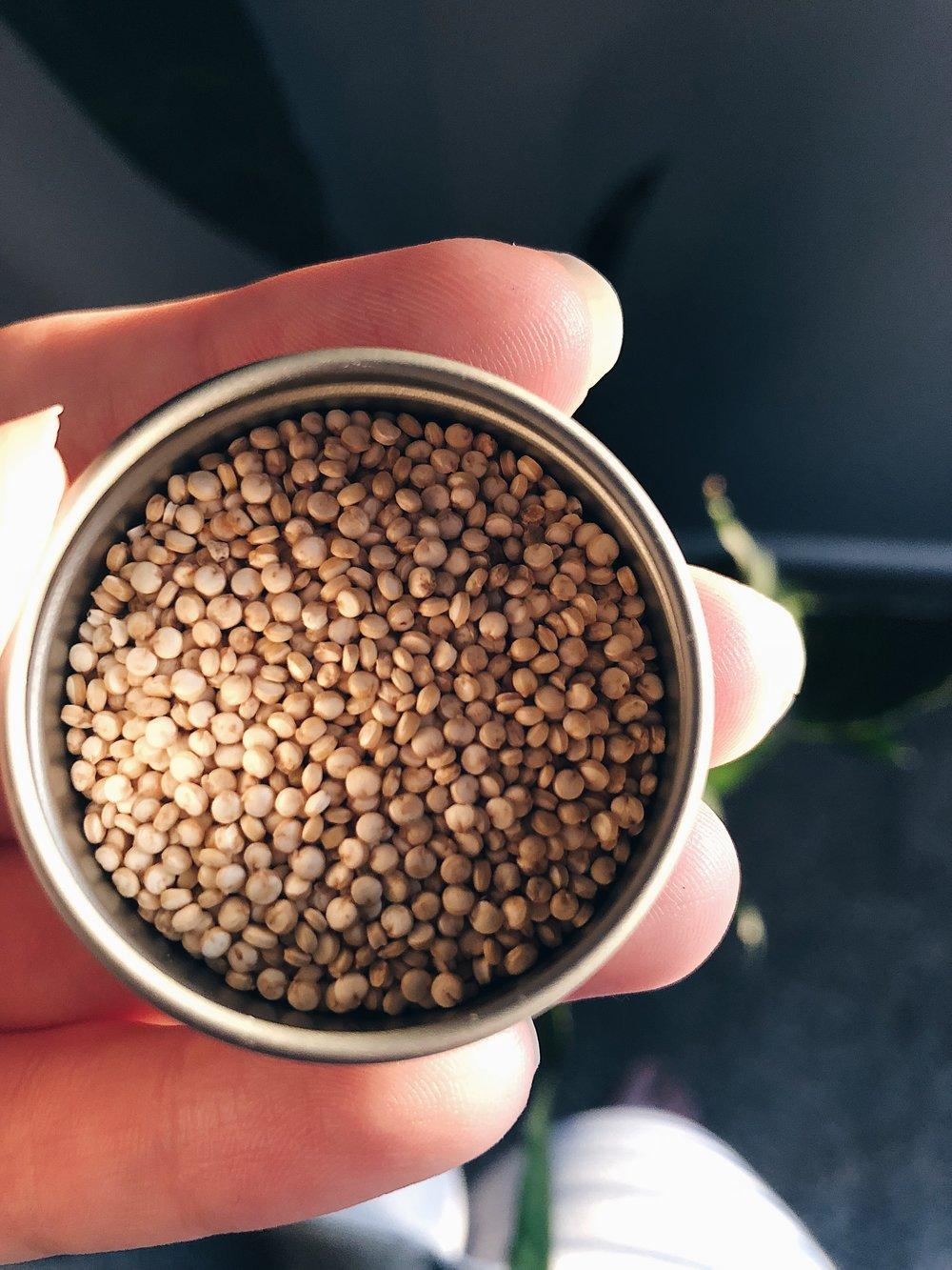 Quinoa .jpeg
