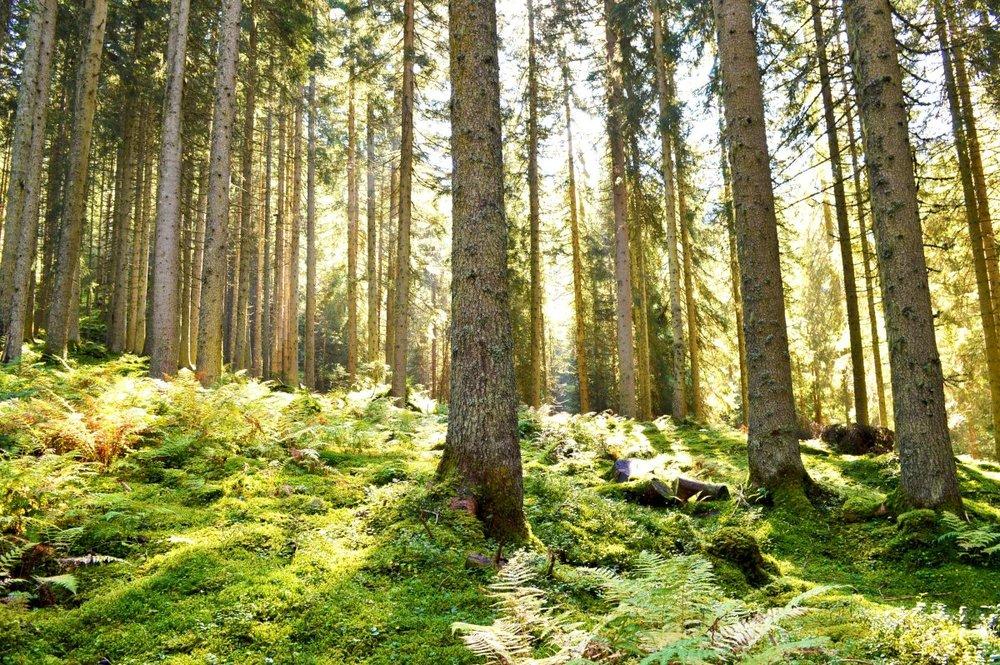 forest_light_green_energy_austria_sun_landscape_nature-1404866.jpg!d.jpeg