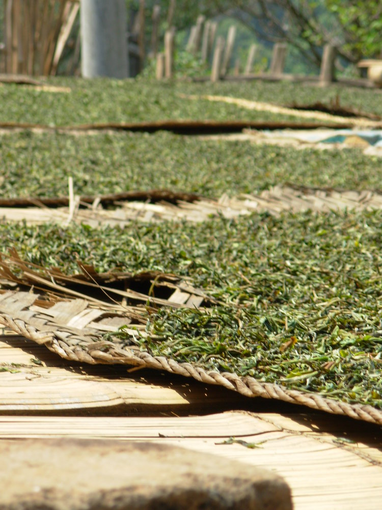 Wild, hand-picked tea drying in the sun on rooftops. Xishuangbanna Jungle, Yunnan, China 2007.