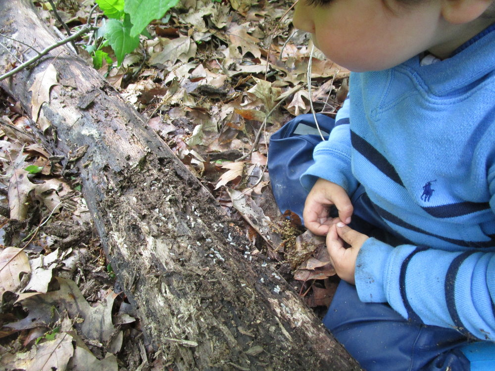 Gabo investigating life on a log