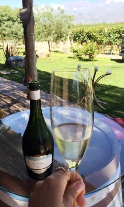 Giminez Rilli Vineyards in Mendoza,Argentina