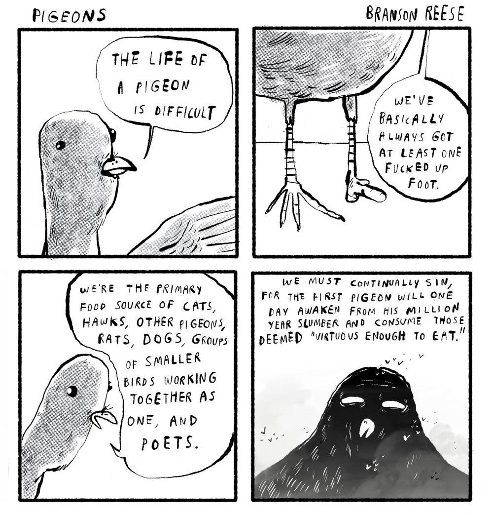 0153 pigeons2.jpg