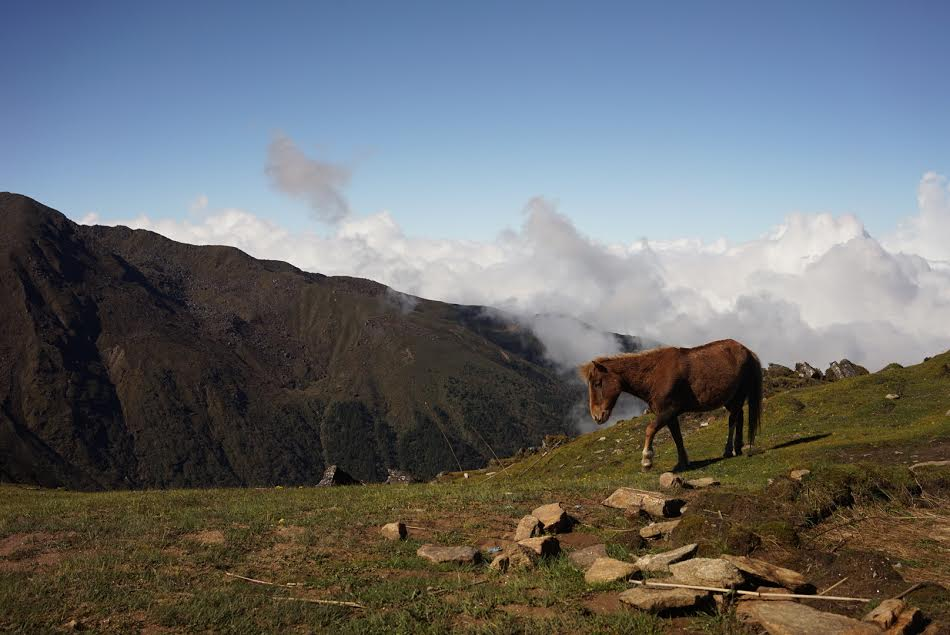 Once sunny day in Langtang. Photograph by Minh.
