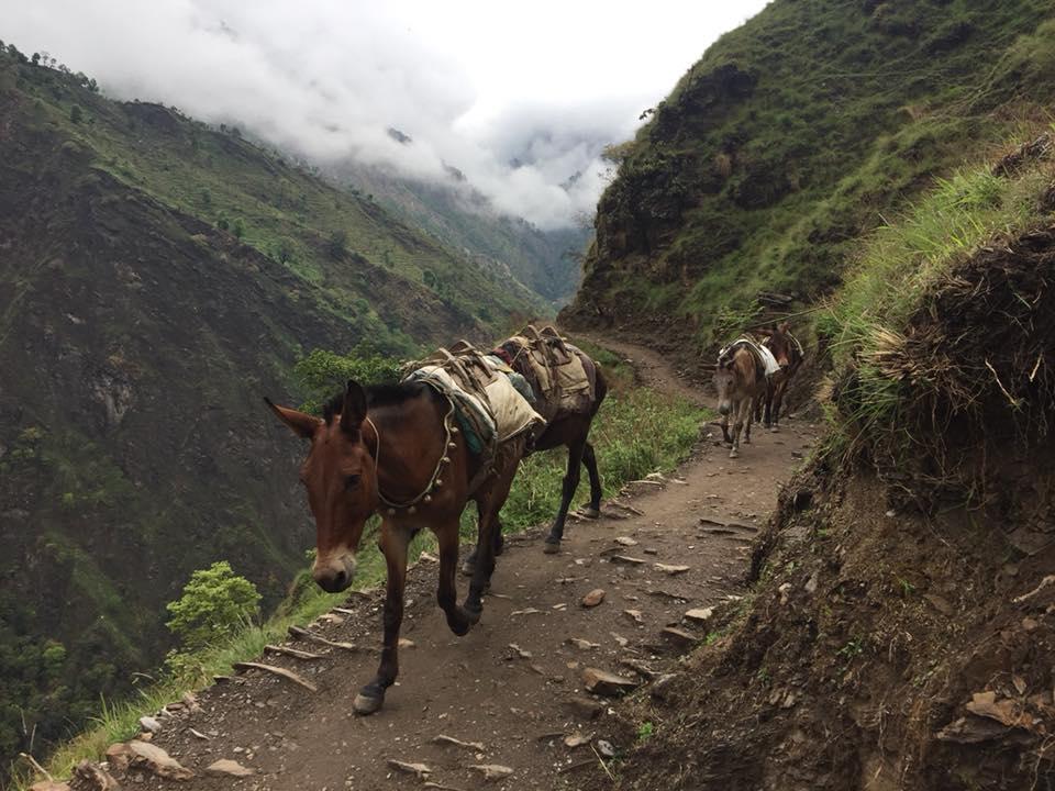 Sharing the trail with mule caravan toward Jagat