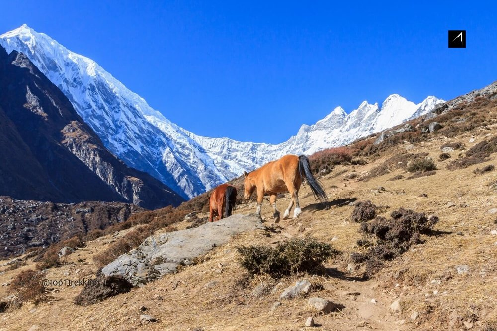 Dãy núi Himalaya nhìn từ làng Kyanjin Gompa
