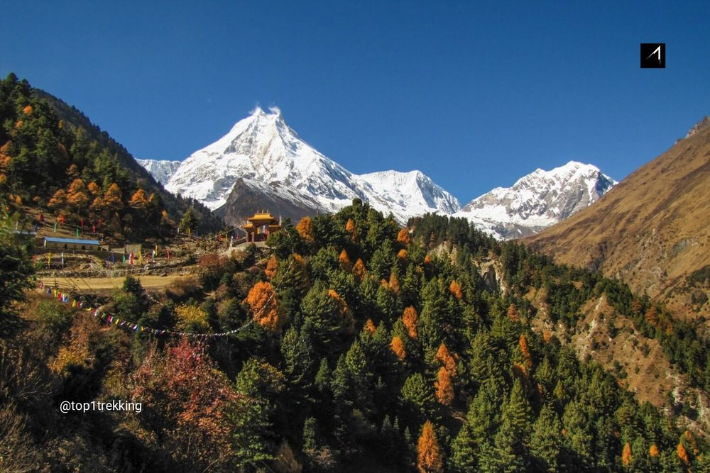 Autumn forest at the foot of the eight highest mountain Manaslu in Nepal