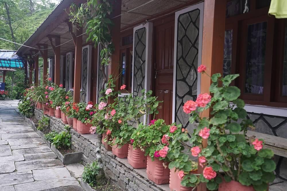 Những bông hoa ở bậc thềm nhà nghỉ