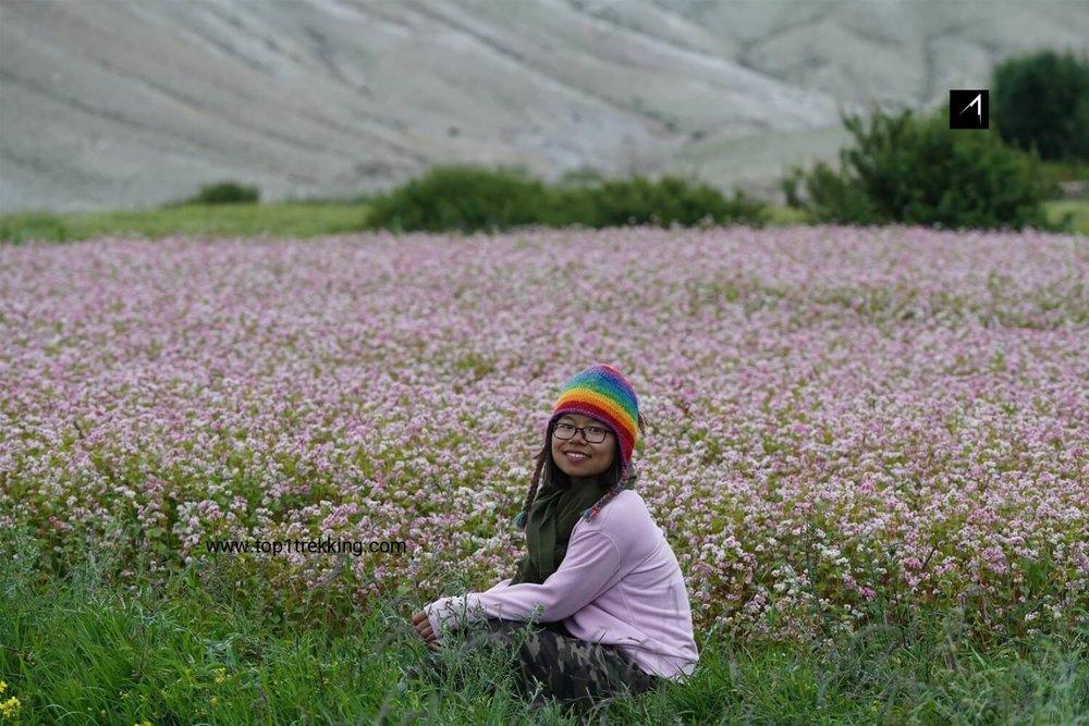 Thửa ruộng hoa tam giác mạch ở Lo Manthang, Mustang