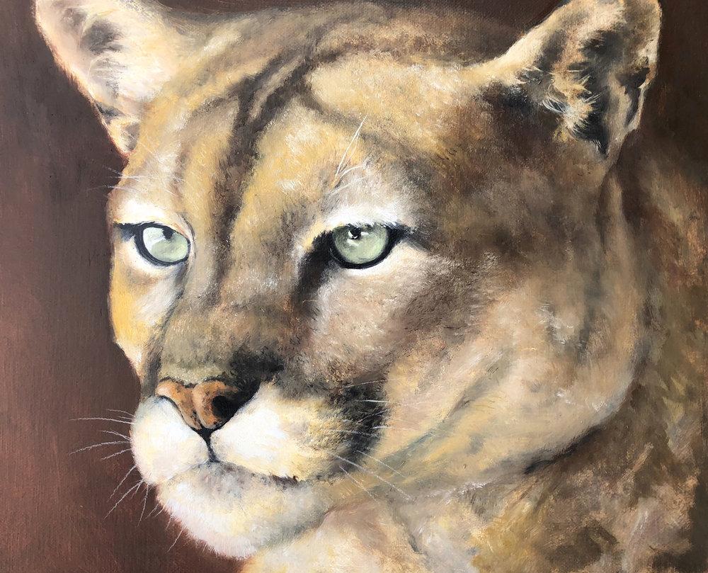 """""""Mountain Lion Study"""""""