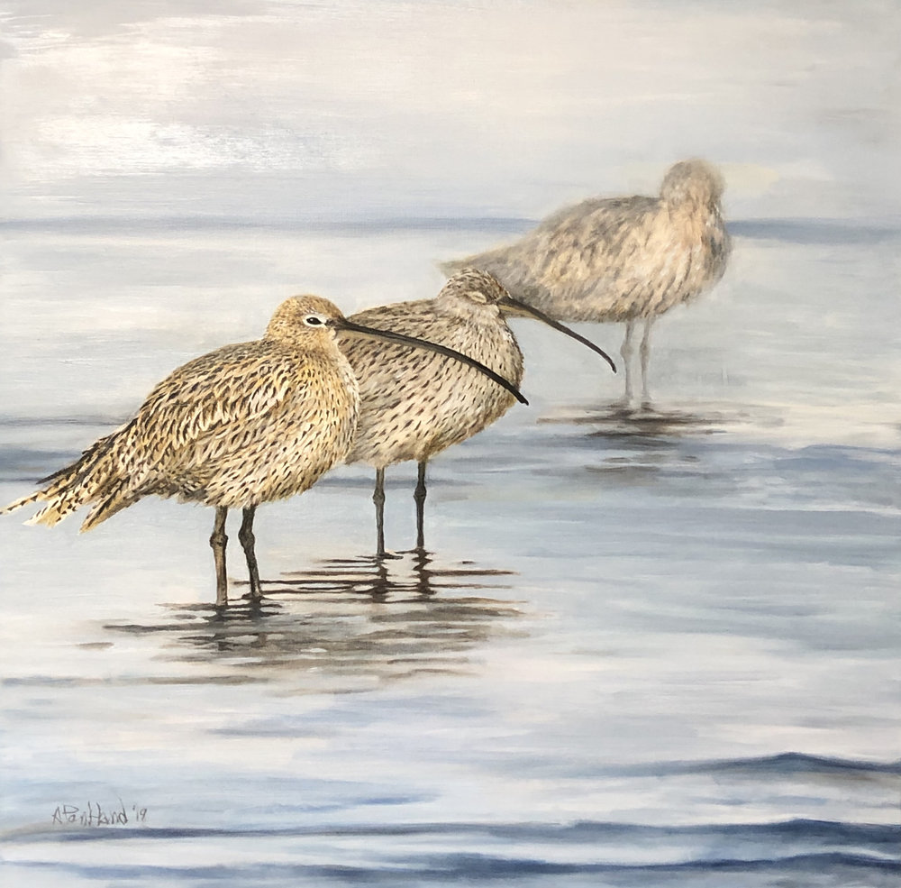 Long-Billed Curlew Group