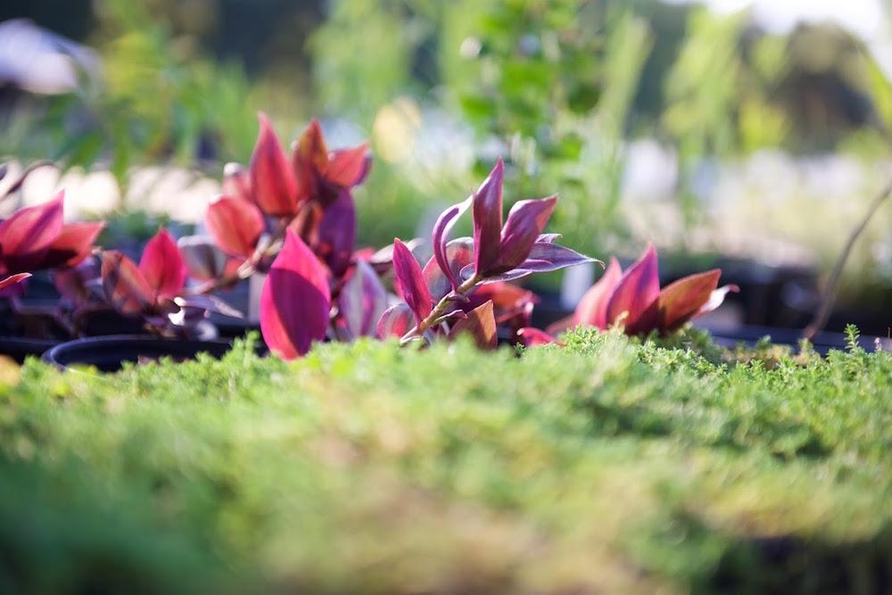 McConnell Arboretum & Botanical Gardens.jpg