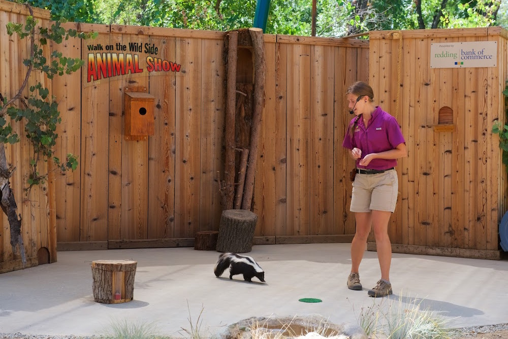 Turtle Bay Animal Show Skunk.jpg