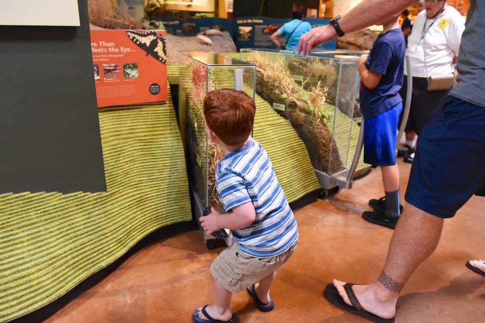 Turtle Bay Exploration Park Museum.jpg
