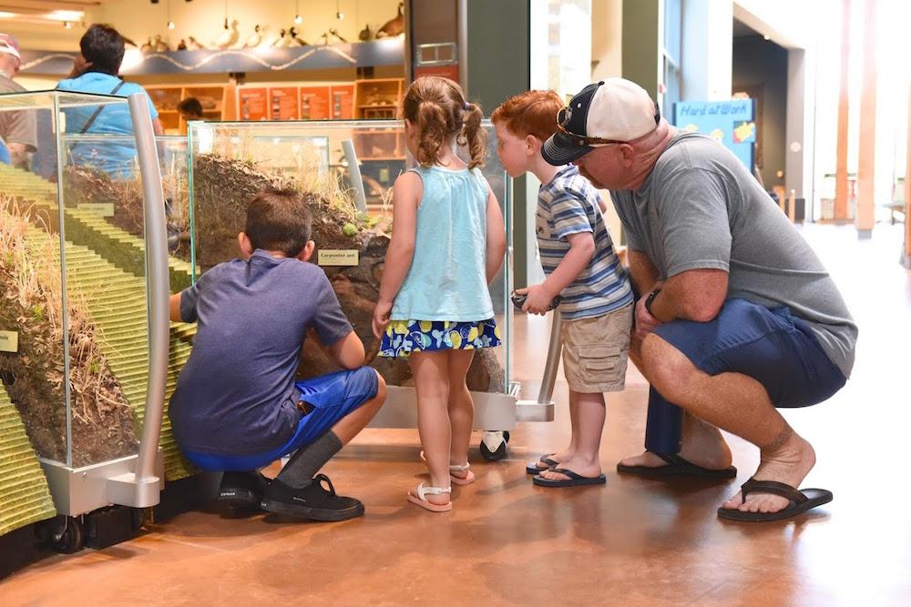 Turtle Bay Exploration Park Museum Redding.jpg