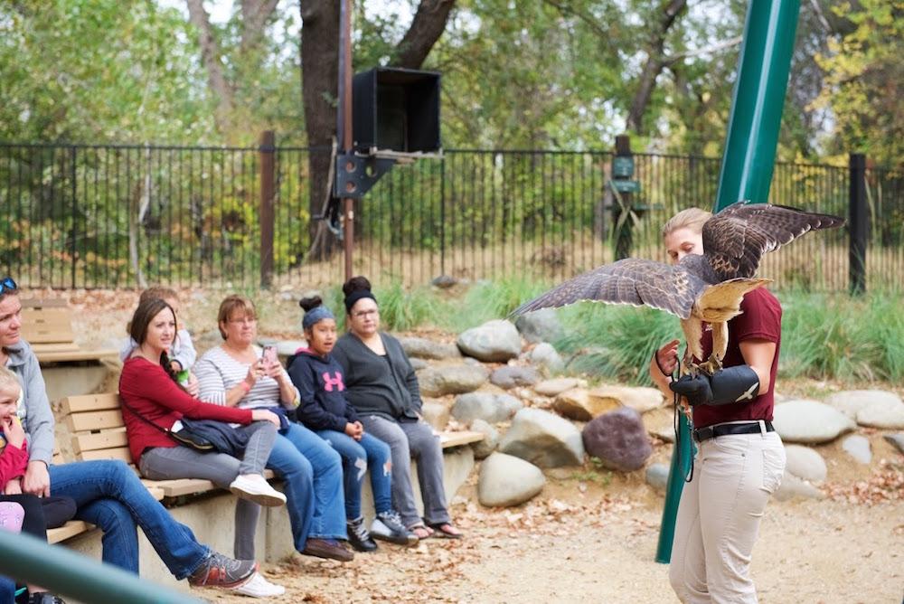 Redding California Animal Show.jpg