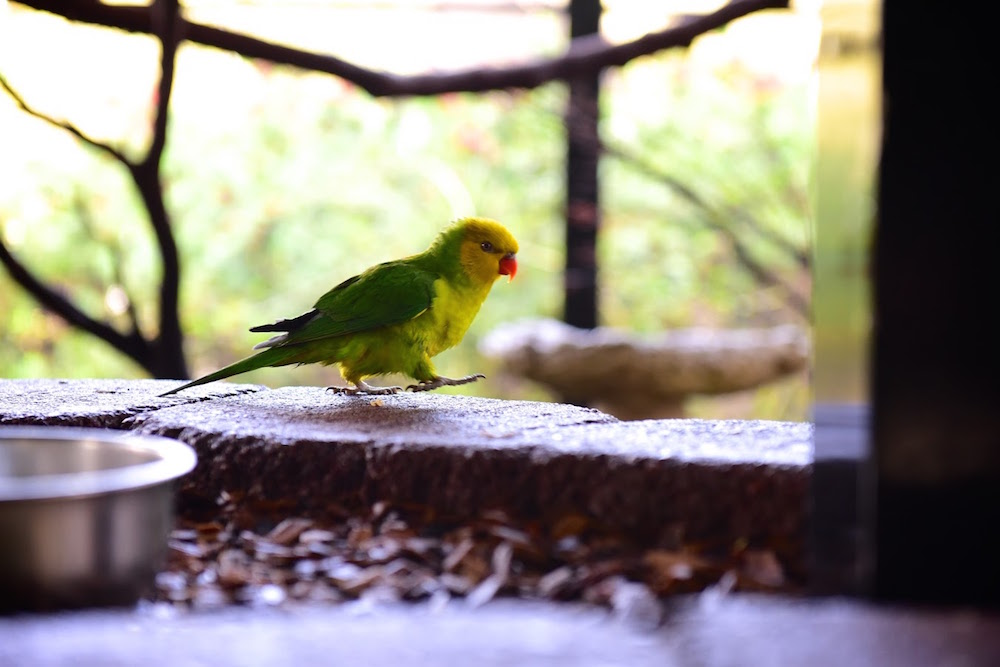 Parrot Playhouse Redding California.jpg