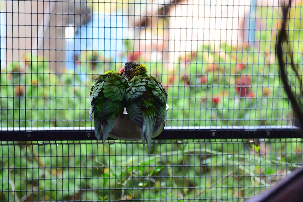 Parrot Playhouse Redding.jpg
