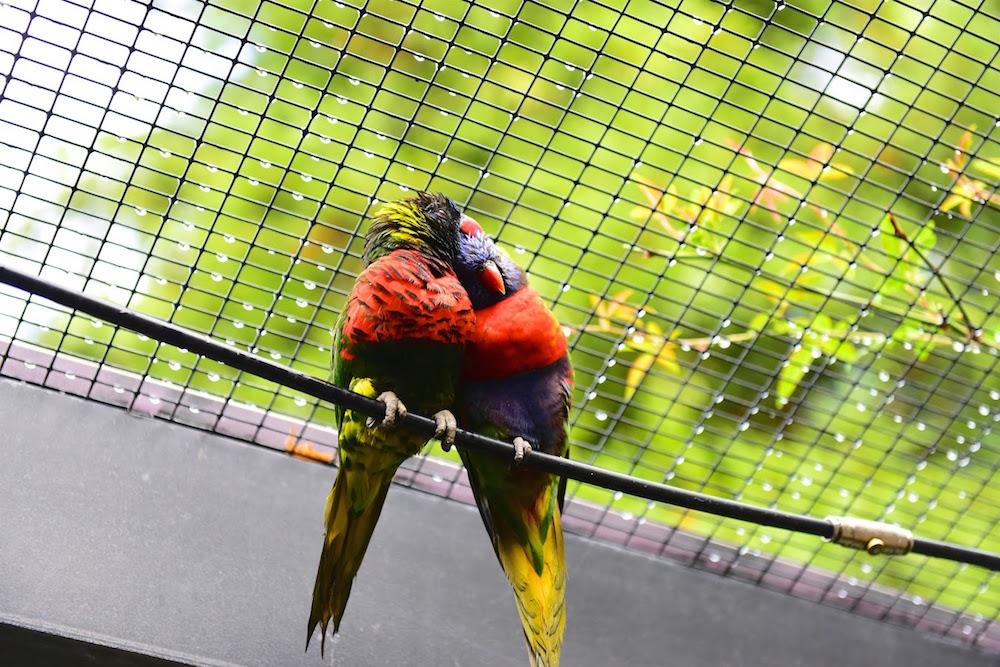 Redding California Parrot Playhouse.jpg