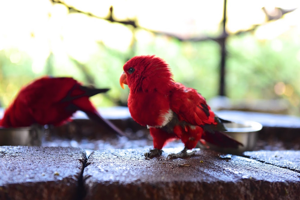 Turtle Bay Museum Parrot Playhouse.jpg