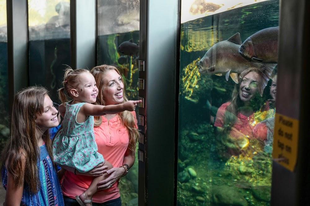 Visible River Aquarium
