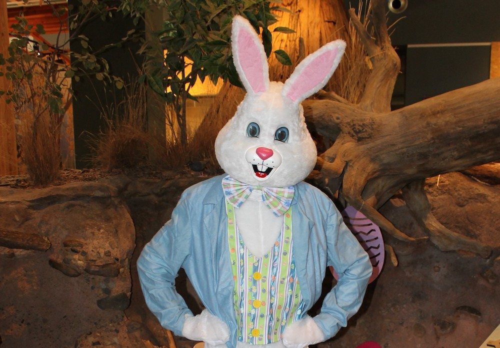 Turtle Bay Easter Bunny.jpg