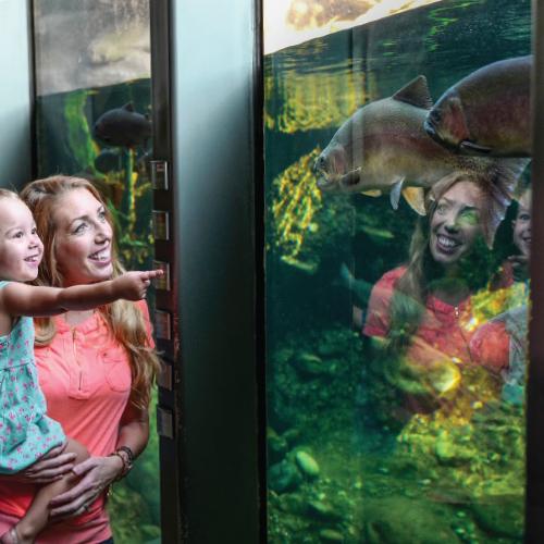 TBMK-AnnualAppeal-2018-500x500-inset-images-AquariumFam-1.jpg