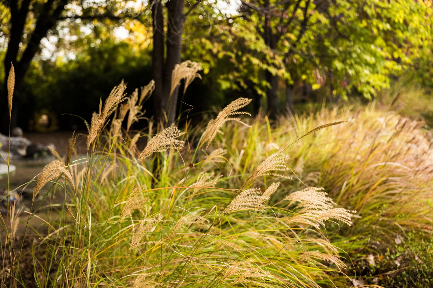 Ornamental Grasses Form Movement And Light Turtle Bay