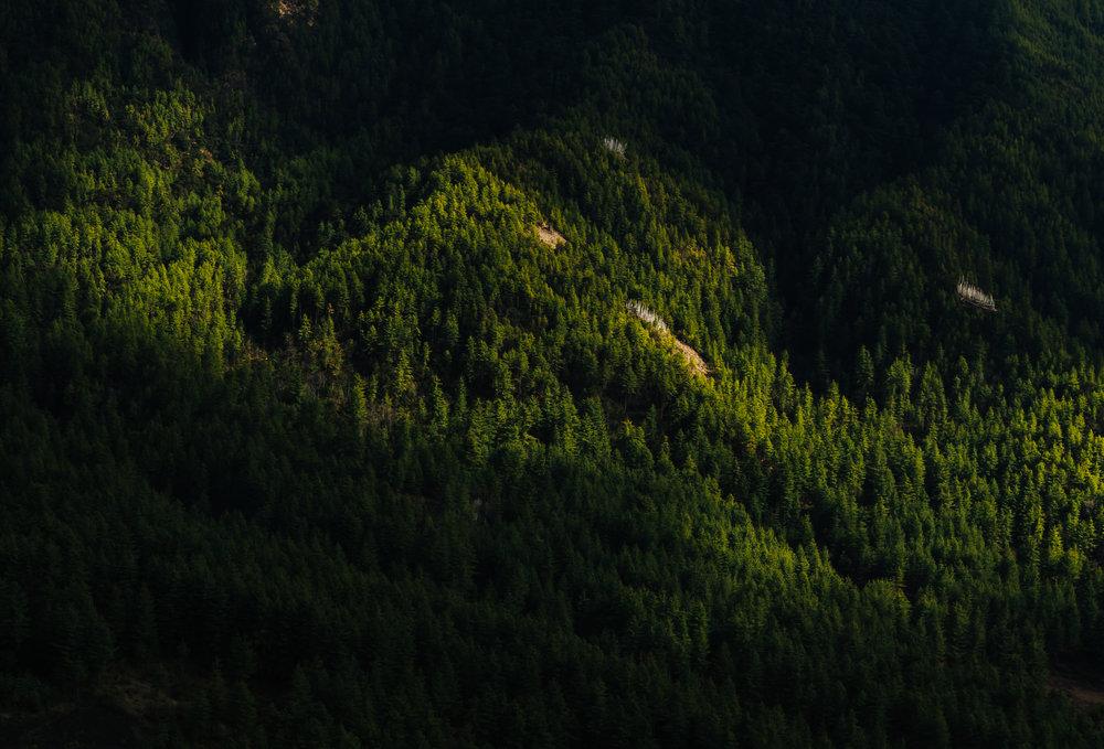 Bhutan-forest