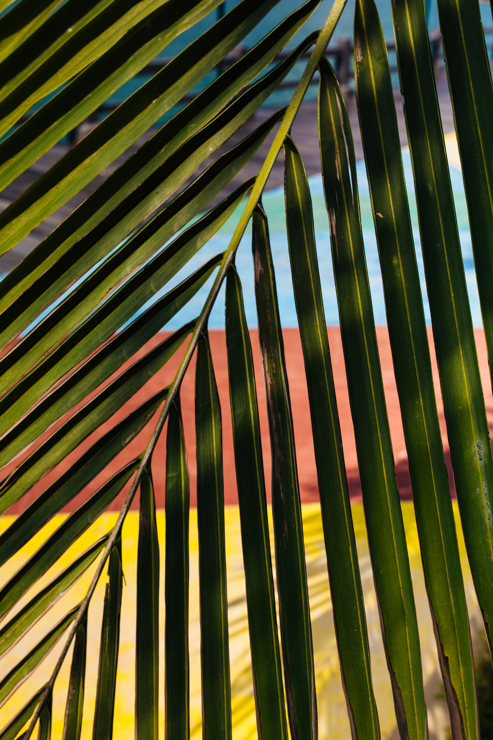 Langkawi palm abstract