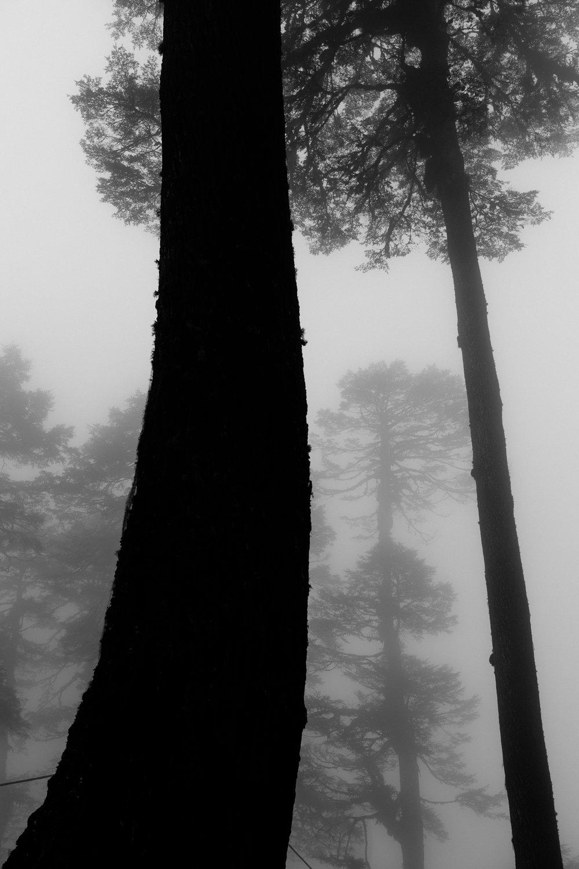 mist giants