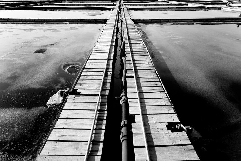 salt farm walkway