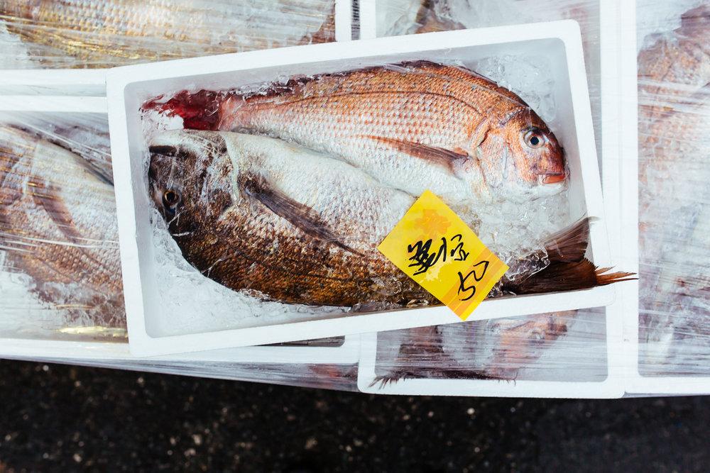 Tokyo-tsukiji-fish-shipping