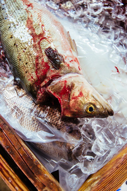 Tokyo-tsukiji-dead-fish