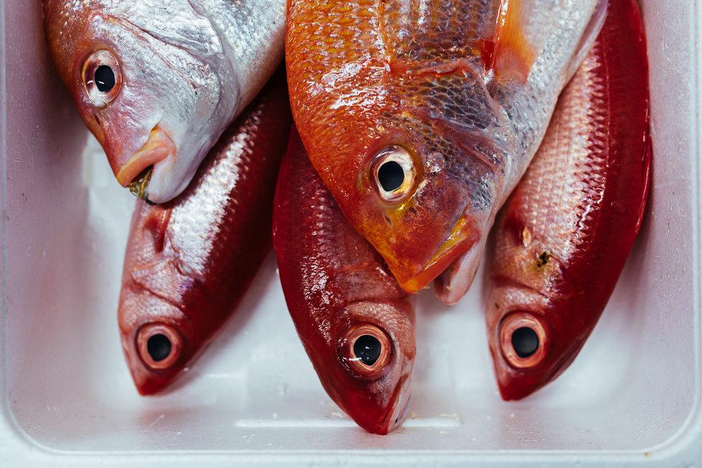 Tokyo-tsukiji-fish-sale