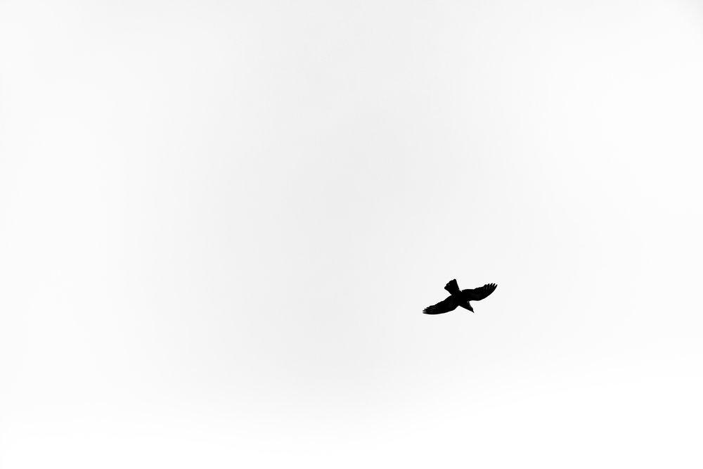 bird-flight-korea-1.jpg