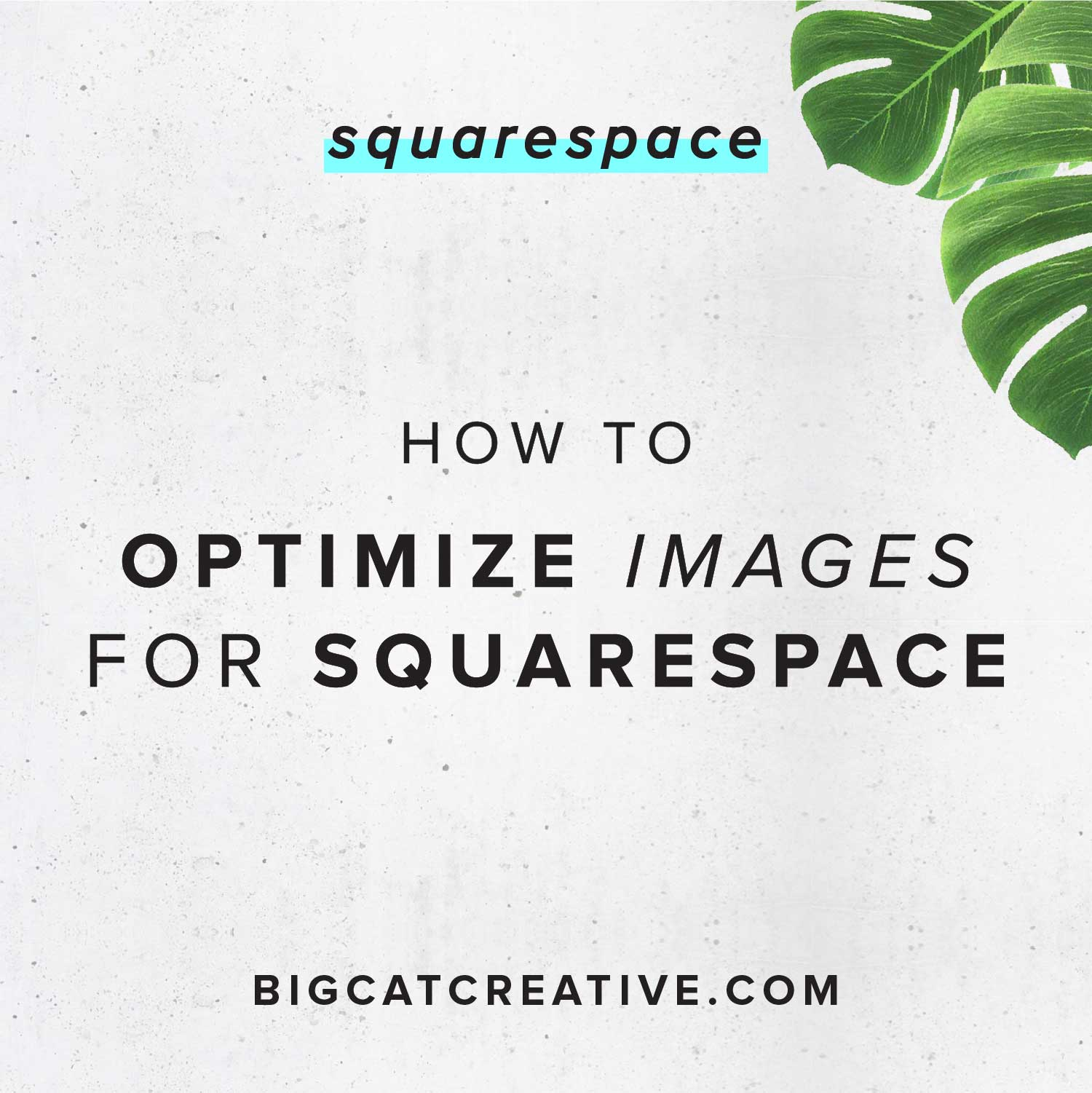 How to Optimize Images for Squarespace — Big Cat Creative