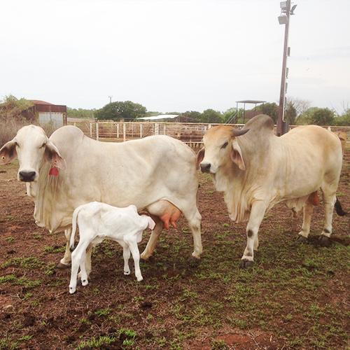The-Bull-Family.jpg