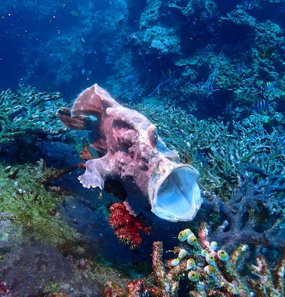 Blue Corner Dive -Menjangan &North Bali - PADI Dive Centres