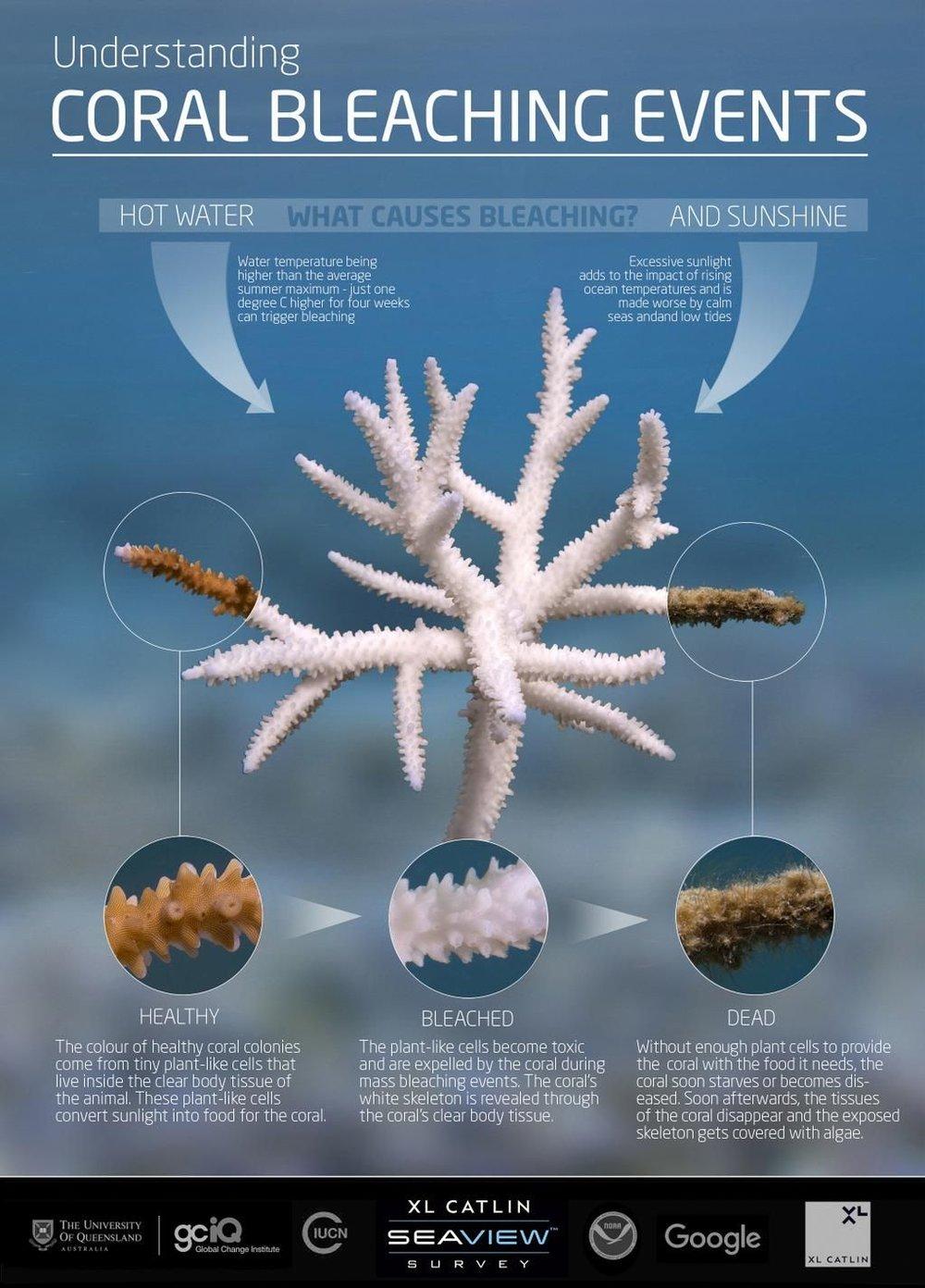 Understanding Coral Bleaching