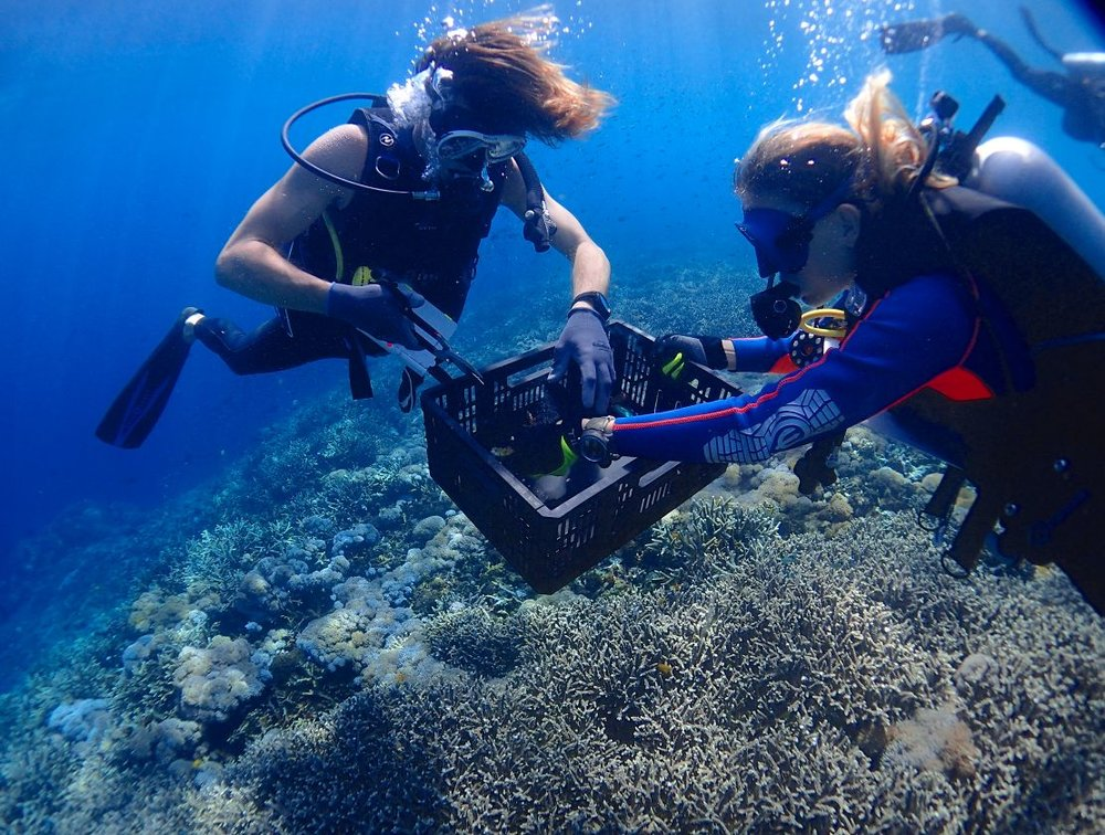 Blue Corner Reef Restoration Andrew Fi.JPG