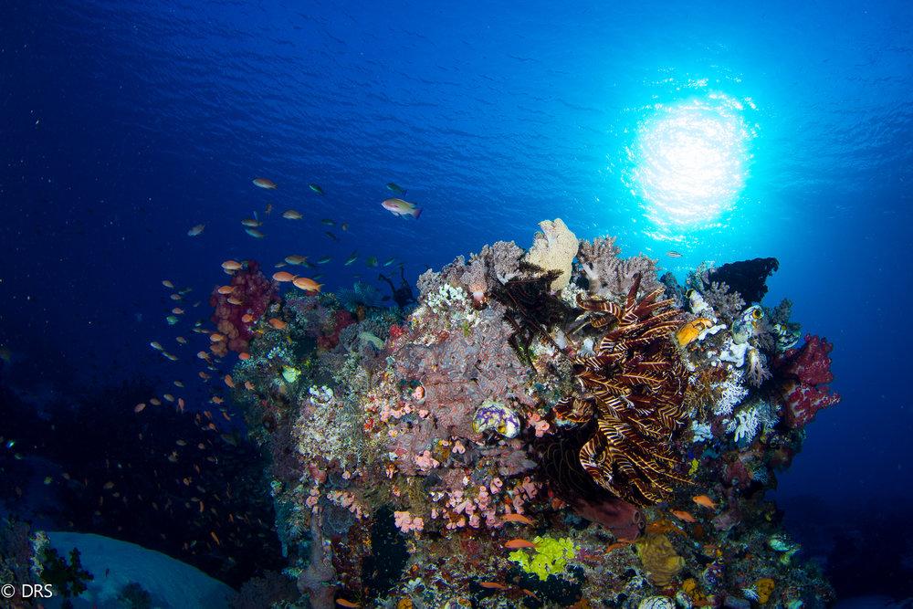 Coral Reef Deris Northman .jpg