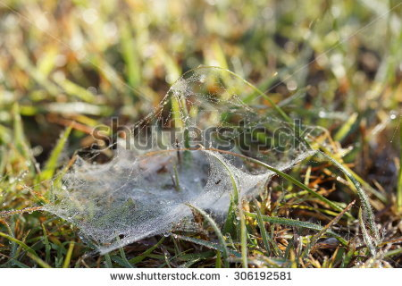 stock-photo-spider-web-closeup-in-grass-306192581.jpg