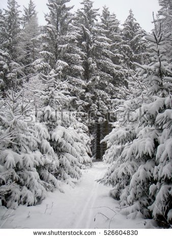 stock-photo-winter-forest-526604830.jpg
