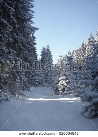stock-photo-winter-forest-scenery-526604845.jpg