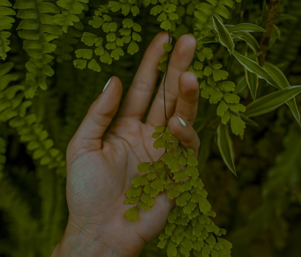 ferns & hand toa-heftiba-315308.jpg