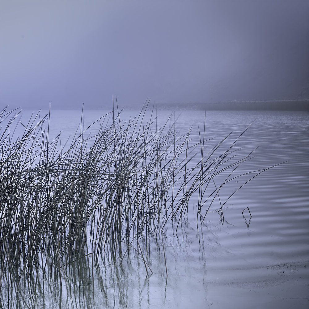 Reeds, study#3 - Torres del Paine, Patagonia