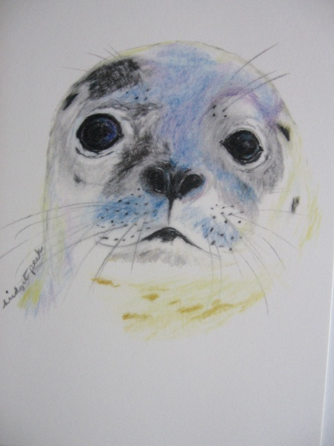 Seal Face Notecards