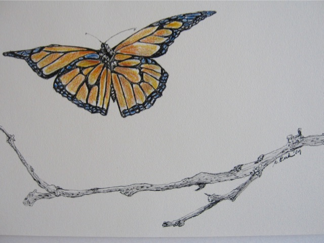 Butterfly Landing Notecards