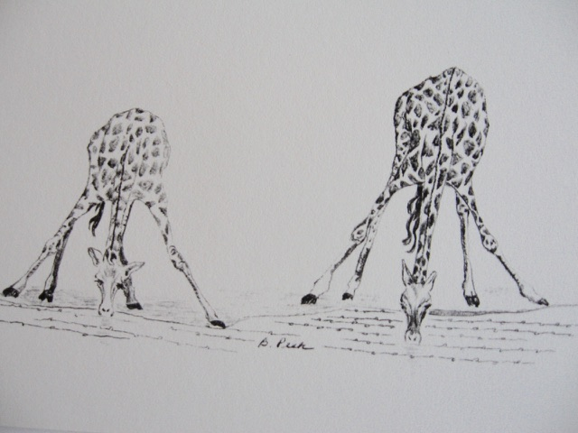 Two Giraffes Notecards