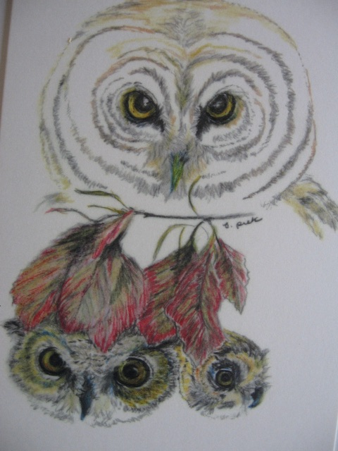 Owl and Babies Notecards